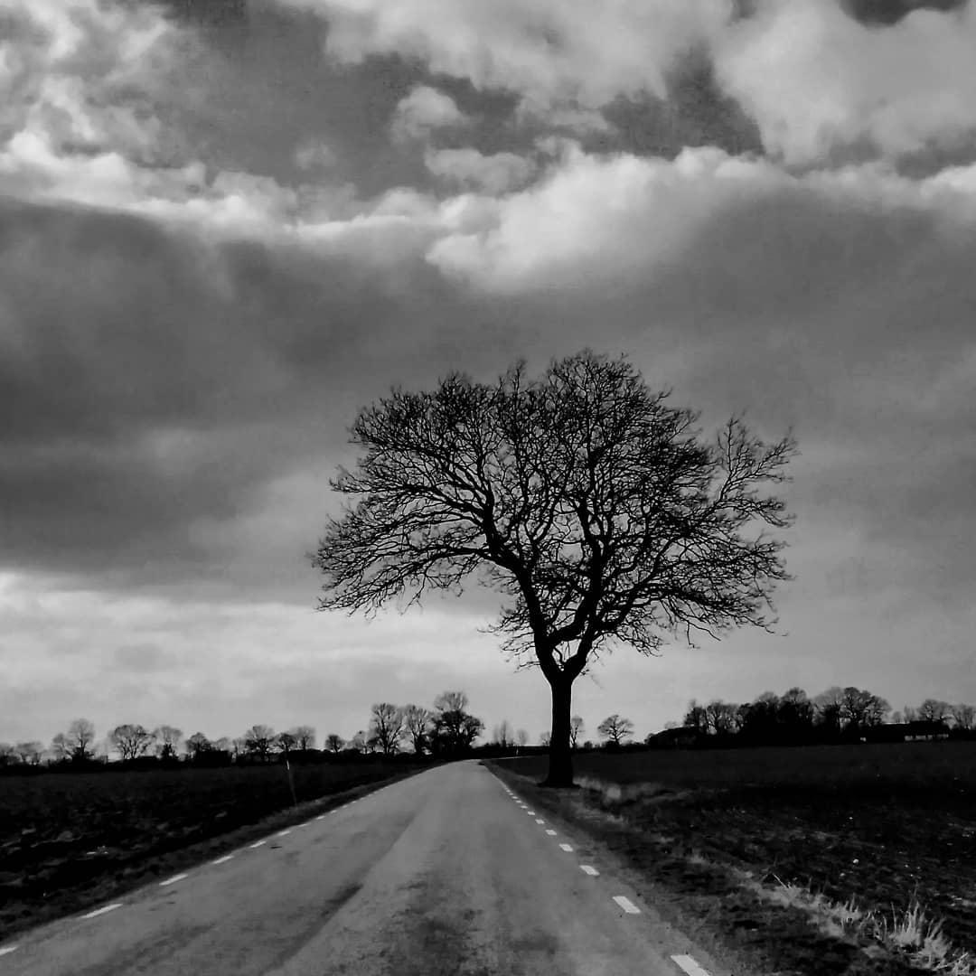 Tree by Vik